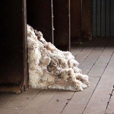 Wool in a shearing shed. Sheep Farm, Spinning Yarn, The Shepherd, County Fair, Australia Living, Aussies, Business Photos, Farm Yard, Shearing