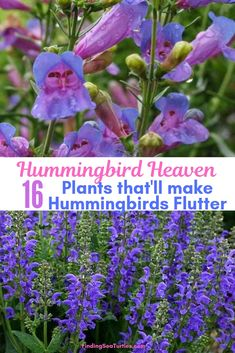Perennials That Attract Hummingbirds to Your Garden! - Finding Sea Turtles 16 Perennials That Attract Hummingbirds to Your Garden! - Finding Sea Perennials That Attract Hummingbirds to Your Garden! Hummingbird Plants, Flower Landscape, Garden Planning, Flower Garden, How To Attract Hummingbirds, Beautiful Flowers Garden, Perennials, Plants, Planting Flowers