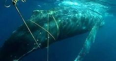 Study: Weaker Fishing Nets Could Save More Whales - Wide Open Spaces
