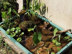 aquatic plant/ garden