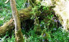 Image result for forest bushes