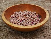 Petaluma Gold Rush beans