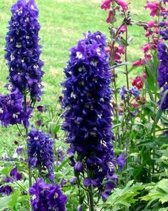 """Flowers: Delphinium (""""the ability to transcend the bounds of space and time"""")"""