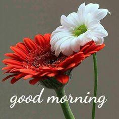 Good morning, i just woke up... im late