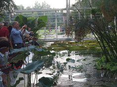 nuove serre orto botanico, Padova, Italy