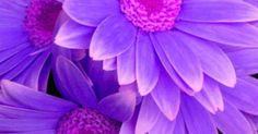 Just Pinned to Flowers: purple http://ift.tt/2qsshks