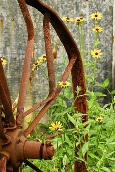 Rusty old wagon wheel with Maryland's state flower, the Black-eyed Susan Rudbeckia goldsturm Country Charm, Rustic Charm, Rustic Feel, Old Wagons, Rust In Peace, Farms Living, Black Eyed Susan, Country Girls, Country Life