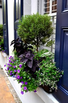 Charleston flower box 2014