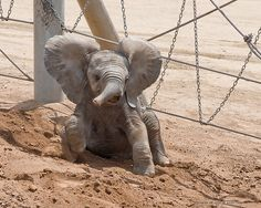 This guy, whos gotten into a bit of a pickle. | 16 Baby Elephants We Would Like To Be Best FriendsWith