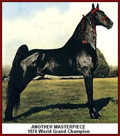 1974 World Grand Champion. Another Masterpiece. Tennessee Walking Horse.
