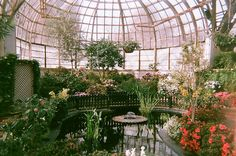 i need an elegant pond. in the conservatory. to grow my tropical water lilies. Motifs Art Nouveau, Magic Places, Botanical Gardens, Beautiful Gardens, Beautiful Places, Scenery, Decoration, Pretty, Greenhouses
