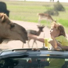 19 GIFs of Animals Knocking Out Kids Because We All Need This Right Now