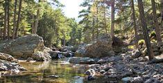 Journée magique dans la forêt d'Aïtone Corsica, Photos, France, River, Nature, Places, Oeuvres, Outdoor, Comme