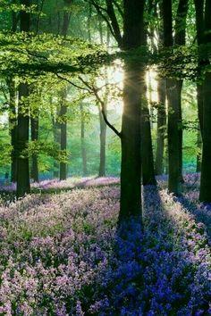 Lavendarwoods