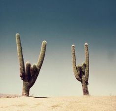 Rock on Cactus!