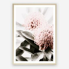 Add a feminine touch to any wall with our Waratah Flowers II Photographic wall decor. Mirror Artwork, Canvas Artwork, Mdf Frame, Canvas Frame, Framed Art Prints, Canvas Prints, Artwork Design, A Table, Paper Art