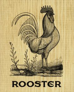 Black And White Chickens, Rooster Illustration, Diy Magazine Holder, Clay Animation, Chicken Drawing, Chicken Logo, Punk Tattoo, Kitchen Posters, Chalk Lettering