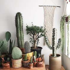 It's cactus season ! Thanks for sharing your gang with us @craigowilliams We post a new photo from #InteriorRewilding each week. Tag your indoor green oasis for a chance to be featured.