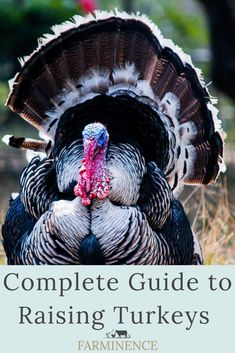 Looking for some tips and advice to improve your turkey hunting skills? Use our guide on the best turkey hunting tips for beginners and become a pro! Turkey Farm, Wild Turkey, Thanksgiving Turkey, Pet Turkey, Baby Turkey, Christmas Turkey, Happy Thanksgiving, Thanksgiving Recipes, Christmas Eve