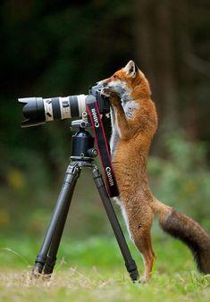 28 adorables imágenes de animales que quieren ser fotógrafos profesionales