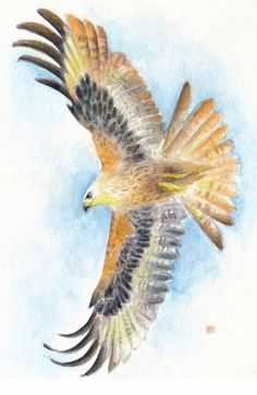 Soaring Hawk watercolour art by Evey Studios. Would be purdy cool... i love birds of prey or whatever they called
