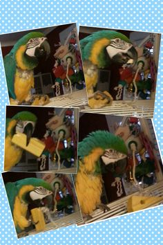 Mac enjoying his Hodge Podge! Thank you, Diana :) That's my baby! Bird Toys, Parrot, Diana, Mac, Birds, Photos, Painting, Pictures, Parrot Bird