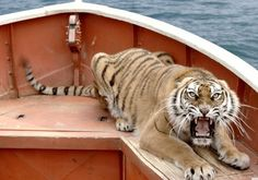 """""""Richard Parker"""" - tiger from the movie """"Life of Pi"""" Life Of Pi Tiger, Ang Lee, New Cinema, Around The World In 80 Days, Tim Beta, Trailer, Pirates Of The Caribbean, Visual Effects, Photos Du"""