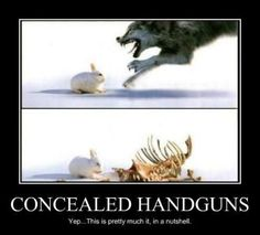 Concealed Handguns in a Nutshell