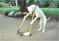 Dog scooping poop. I freaking wish!