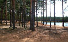 forest - Full HD Wallpaper, Photo 2560x1600