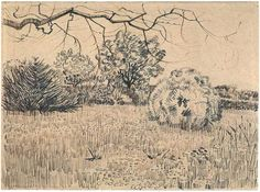 Field of Grass with a Round Clipped Shrub by Vincent Van Gogh Drawing, Pencil, reed pen and brown ink on wove paper Arles: May - early in month, 1888