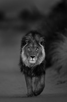 Hannes Lochner Wildlife & Nature Photography