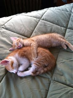 theperfectworldwelcome:  hitmewithcute:  Tiny kitty is the big spoon….    Beautiful !!! \O/