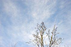 Cime d'arbre dans les nuages. ©David-Maxime Samson
