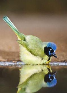 All Birds, Cute Birds, Pretty Birds, Little Birds, Beautiful Birds, Animals Beautiful, Exotic Birds, Colorful Birds, Wild Birds Unlimited