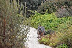 A high country native garden at Cloudy Hill - GardenDrum