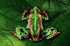 Look very closely. Body paint by johannes stotter