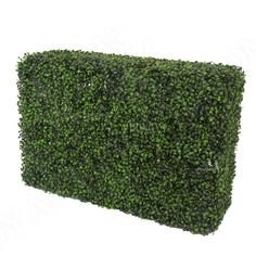 Complete a living wall or a hedge to evoke Old English charm with the help of the Outdoor Rated Artificial English Ivy Square Mat. This high quality artificial mat has an interlocking design that makes it easy to connect the by square with Artificial Green Wall, Artificial Hedges, Artificial Boxwood, Artificial Plants, Ivy Plants, Faux Plants, Screen Plants, Garden Hedges, Boxwood Hedge