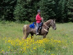 "Shelbi riding our RMHA mare, Fannie Flagg, up on the Grand Mesa in western Colorado.  The ""Mesa Top Trail"" is beautiful with all of it's flowers!"