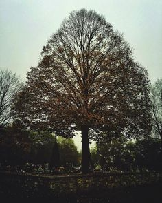 Late autumn  #iphoneography #shotoniphone #vscoczech #vscocze #vsco #onset #filmmaking #moviemaking #ontheroad #exploretocreate #mextures #iglifecz #iglife #igerscz