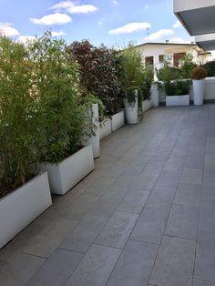 Terrace: bamboo and camelia garden