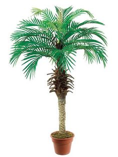 Pack of 2 Artificial Decorative Phoenix Silk Palm Trees 4' -- You can find out more details at the link of the image.