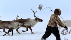 Arctic animals and people