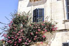 Flowers at a window in Medina, Malta. Window, Flowers, Windows, Flower, Blossoms