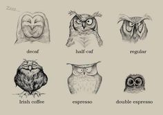coffee and owls