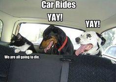 Funny car memes.