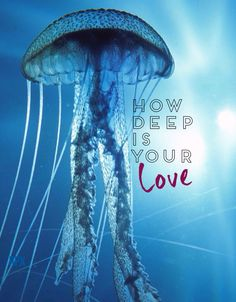 How Deep Is Your Love? - Calvin Harris Wallpapers by rpx ^^