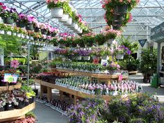 Annual greenhouse at W & W Nursery Apalachin,NY