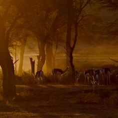 """First Light"" Photo Assignment -- National Geographic Your Shot"