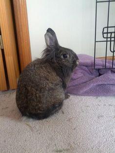 Aster the floof - My first bunny http://ift.tt/22jTHq4